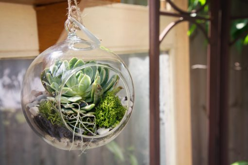 Hanging Terrarium | Dear Delilah Florist, Latrobe Valley