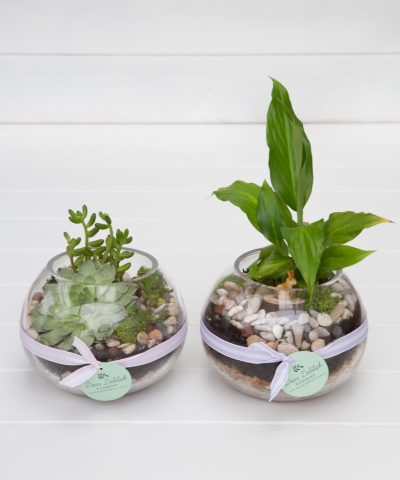 Mini Garden | Dear Delilah Florist, Latrobe Valley