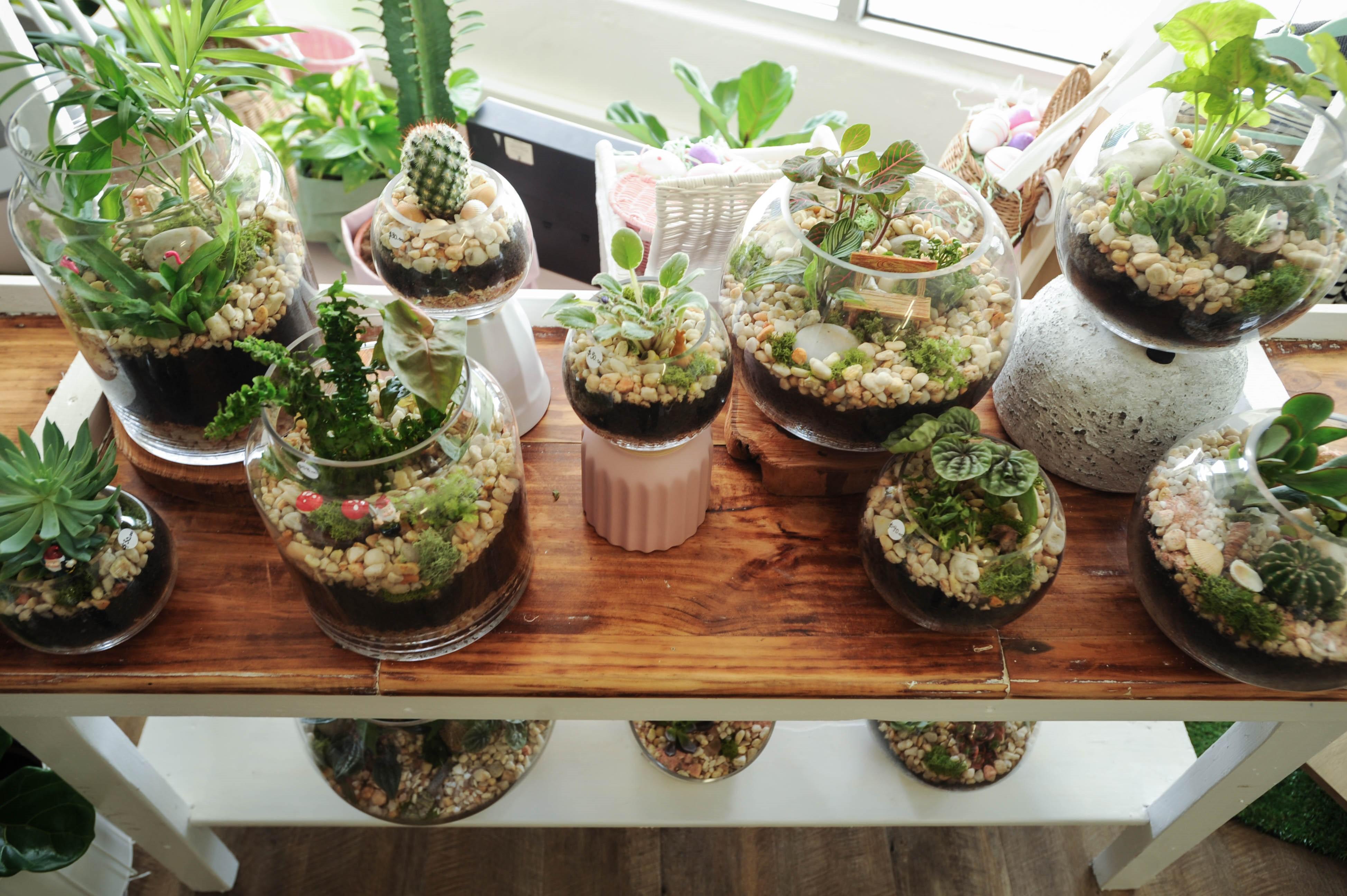 Terrarium Workshop | Dear Delilah Florist